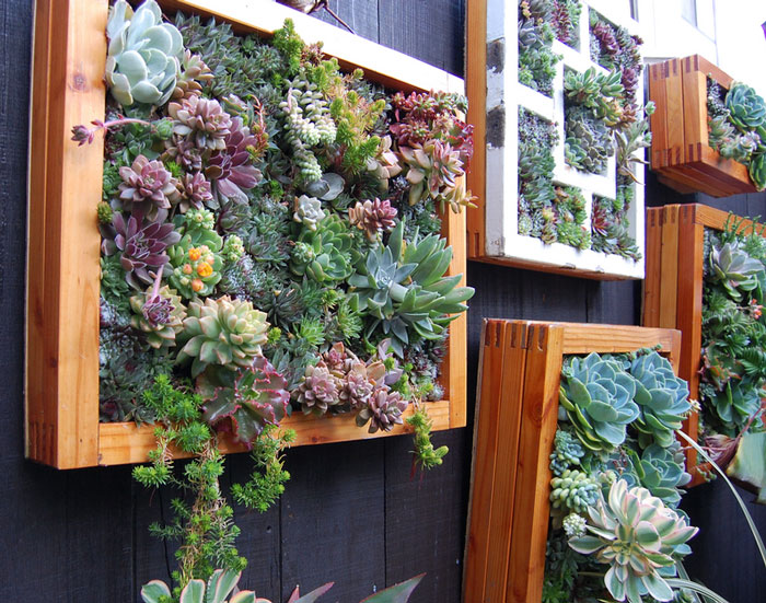 Вертикальное озеленение квартир своими руками