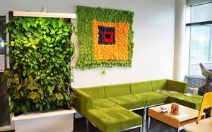 Вертикальное озеленение квартире сам своими руками 12