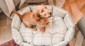 Лежанка для собаки: особенности выбора