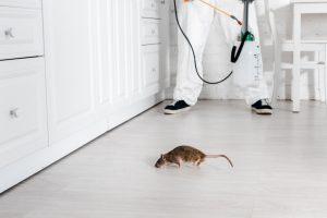Помощь в борьбе с насекомыми и грызунами